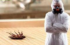 Профессиональная помощь в травле насекомых и грызунов в СПб